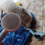 Cat Brush photo review